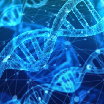Diccionario de términos en la genética de los agapornis, por Alcor